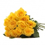 Simply Yellow Roses