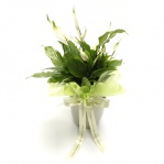 Peace Lily Ceramic