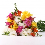 Simply Scented Freesia
