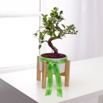 Bonsai Tree (with wooden stand)