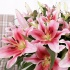 Pink Oriental Lilies (10 Stems)