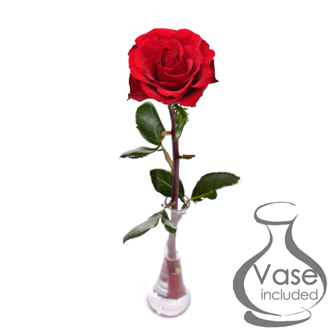 Single Red Rose With Tapered Vase Roses Floric
